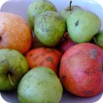 Äpfel (Boskop oder Elstar)
