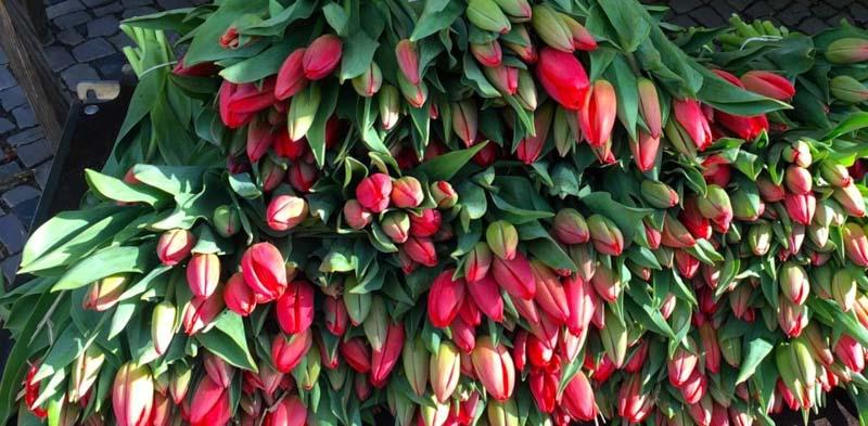 Tulpen-960x472_Blog